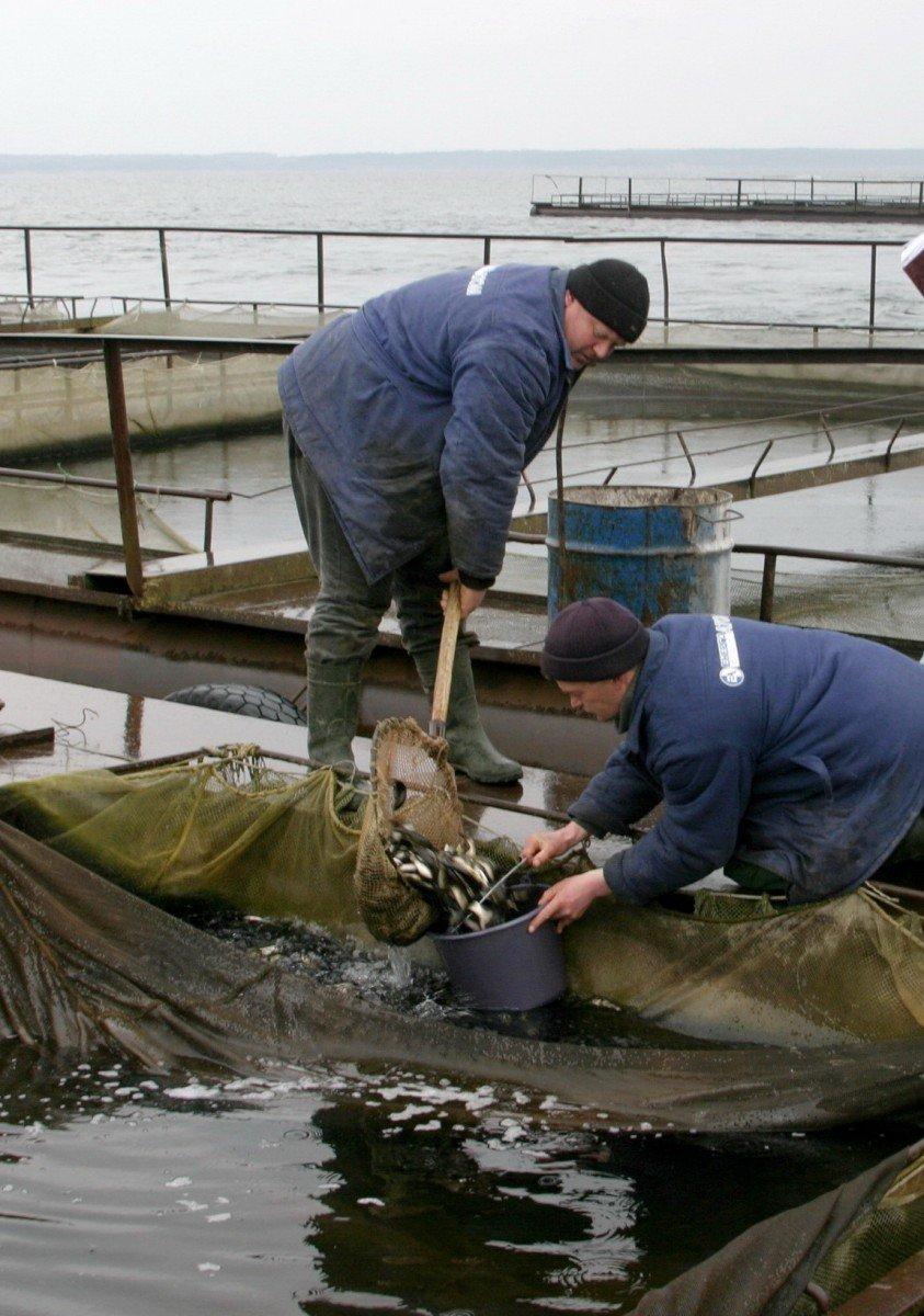 Безпека на Хельницькій АЕС залежить від ... риби